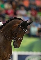 Belinda Trussell and Anton Team Grand Prix WEG 2014 Normandy, Fr Dressage Braids