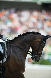 Belinda Trussell and Anton Grand Prix Special WEG 2014 Normandy, Dressage Braids