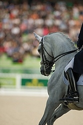 Michael Eilberg and Half Moon Delphi Grand Prix Special WEG 2014 Dressage Braids