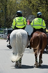 Rolex 2015 Mounted Police Horses