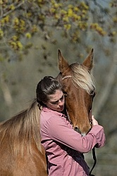 Tennessee Walker With People