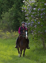 Rocky Mountain Horse on the Trail,Bonnie View Farms Miss Bonnie