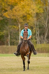 Morgan being Ridden Saddle Seat, Alpha Star First Asset Kavanaug
