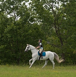Canadian Sport Horse Cornerstone Short Course