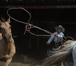 Roping the Horses from the herd