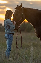Horse and Human Bond Standardbred