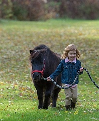 Girl with Miniature Horse