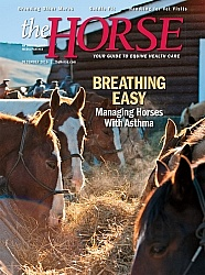 The Horse December 2016