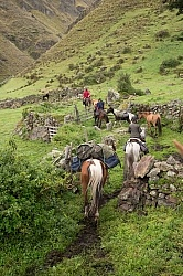Leaving  Angels farm in the high Andes,Ecuador