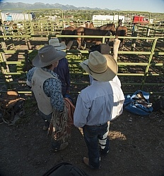 Rodeo Horses In Pens