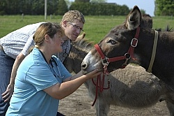 Donkey Sanctuary Vet Treating Donkey