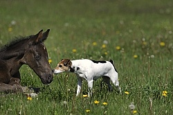 Mare and Foal Barn Dogs