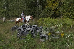 Joe and Major Checking out the Pile of Tires at Horse Country Ca