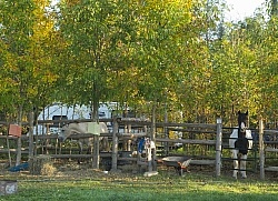 A Corral at Horse Country Campground