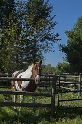 Major in the Corral at Horse Country Campground