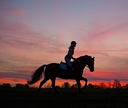 Silhouette of English Rider