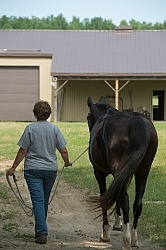 Home Horse Keeping