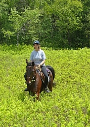 Trail Riding on a Standardbred