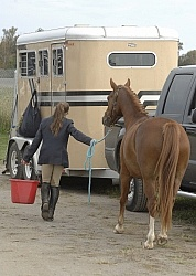 Watering Horse at Horse Show