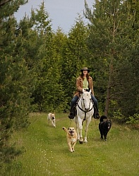 Trail Riding with Dogs