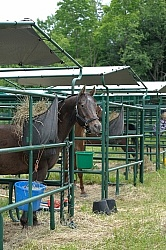 Bailey Boy in his Covered Stall at Pure Country Campgrounds Portable Stalls