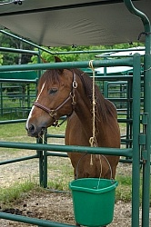 Blaze in his Covered Stall at Pure Country Campgrounds Portable Stalls