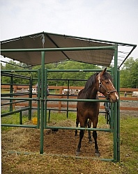 Lefty in His Covered Stall at Pure Country Campgrounds Portable Stalls