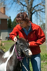 Working With a Miniature Horse