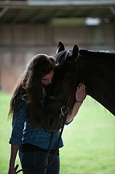 Canadian Horse with Young Girl