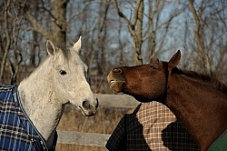 Biting Other Horses