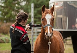 Measuring Height of a Pony