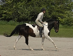 English Canter Work