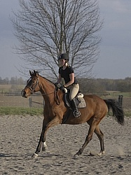Hilltop Equestrian Centre Canter Work