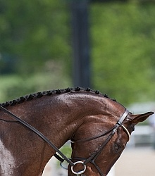 Button Braids on Mane