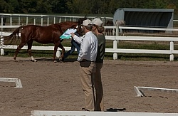 Hanoverian Inspection
