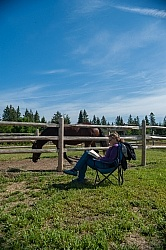 Horse Country Campground Permanent Paddocks