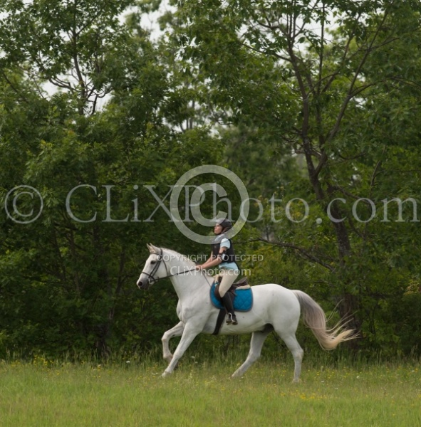 Canadian Sport Horse Cornerstone Short Course Cornerstone Short Course June 2015