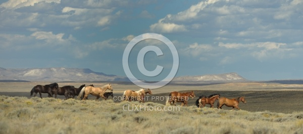 Wild Horses of Wyoming Blue Sky Sage Ride