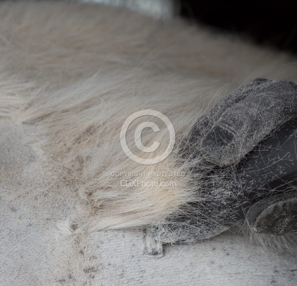 Clipping for Cushings