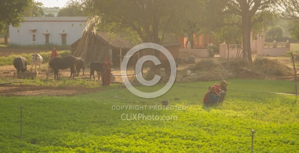 The Countryside in India
