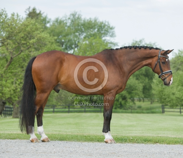 Hanoverian Conformation