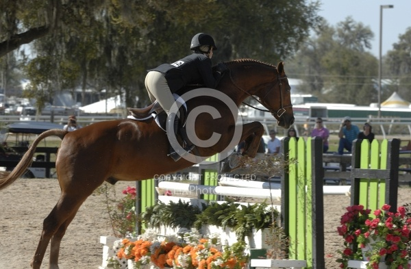 Hunter over Fences
