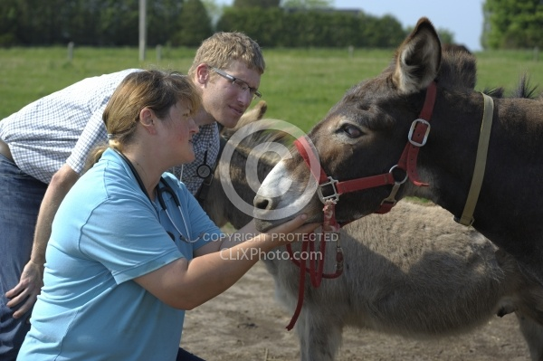 Vet Treating Donkey